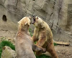 bear-783014_640
